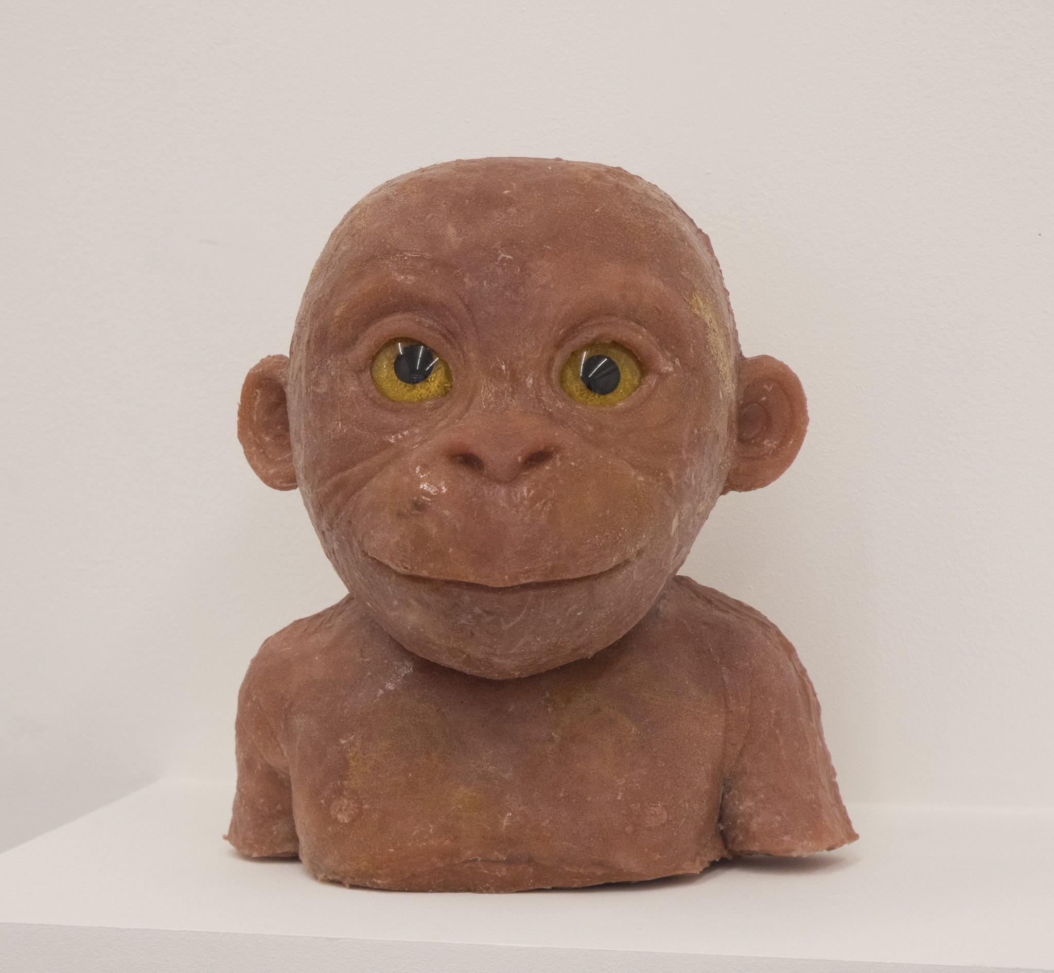 Orangutangunge1